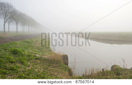 Trees along a foggy canal in spring