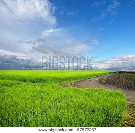 Cultivated green meadow. Rural scene.