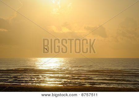 Seagull dives into golden ocean