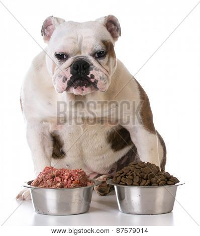 feeding your pet - concept of choosing between raw and kibble