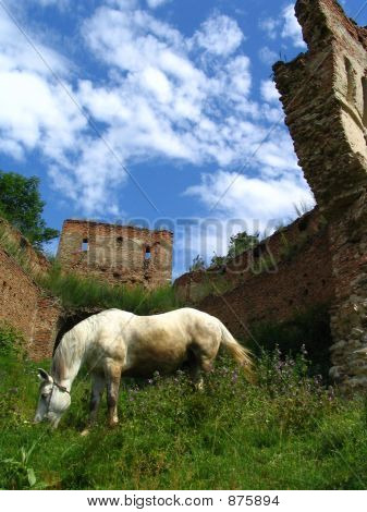 Horse And Ruins