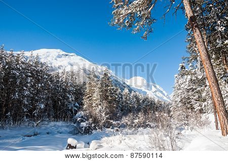 Beautiful Winter Landscape With Big Pines And Mountain View