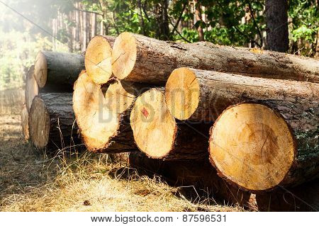 Chopped Tree Logs Stacked In A Pile