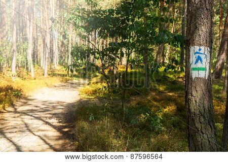 Trail For Nordic Walking In A Forest