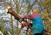 picture of chainsaw  - senior gardener wood cutting with a chainsaw - JPG