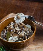 stock photo of fungus  - Marinated honey fungus in brown bowl on wooden table - JPG