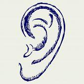 picture of human ear  - Human ear - JPG