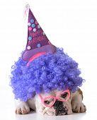 stock photo of dog birthday  - birthday dog  - JPG