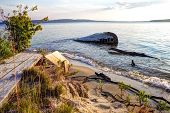 picture of shipwreck  - Shipwreck along a remote Lake Superior beach in Pictured Rocks National Lakeshore in Michigan s Upper Peninsula - JPG