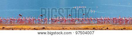 Flamingos On Bogoria Lake