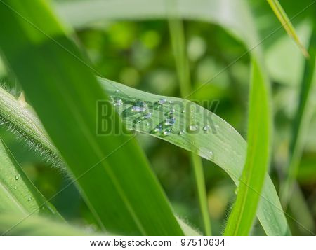 Small Group Of Raindrops On Grass Plants After A Rain In The Park Outdoor.