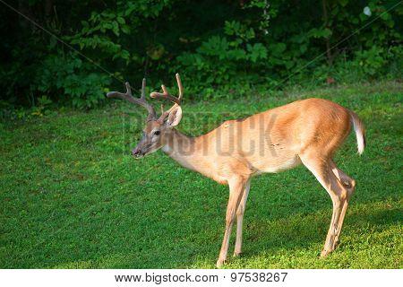 Sunny Buck