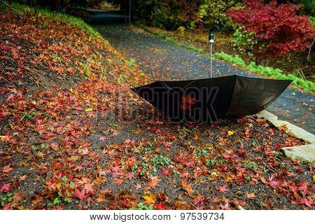 Umbrella Upside Down In Autumn Park