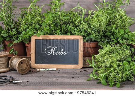 Fresh Herbs With Chalkboard And Vintage Tools. Food Ingredients