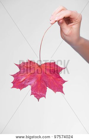 Skincare. Hand With Maple Leaf As Symbol Red Dry Capillary Skin.