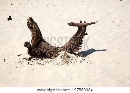 Dried Wood, Roots In Mesquite Flats Sand Dunes