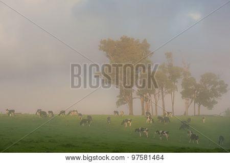 Breakfast In The Fog