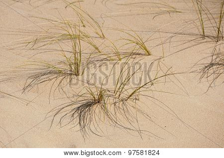 Sparse Grass