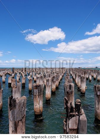 Array of old pier stumps in the Port Phillip bay