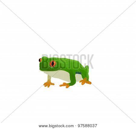 green frog illustration