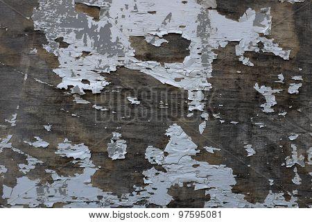 Damaged Tree Peel