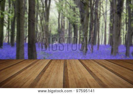 Vibrant Bluebell Carpet Spring Forest Landscape With Wooden Planks Floor