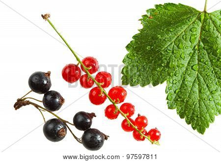 Red And Black Currant Isolated On White