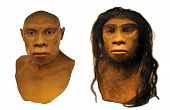 stock photo of homo-sapiens  - Full scale model of the Neanderthal man face - JPG