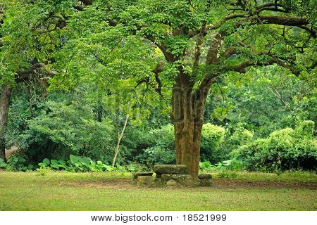 rest place under big tree