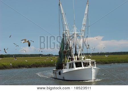 shrimp boat surrounded by gulls, room for copy