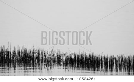 black and white sea grass background with ample room for text
