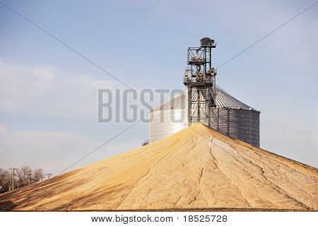 grain dryer and immense pile of corn