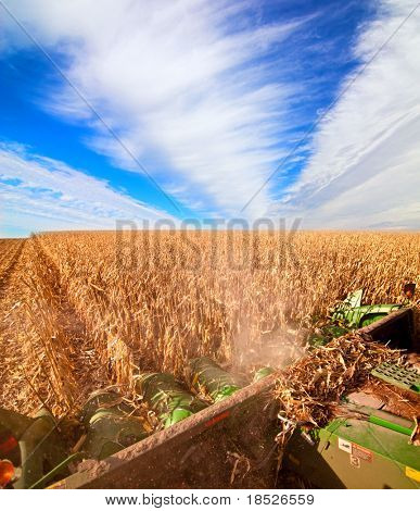harvesting corn, view from on the combine