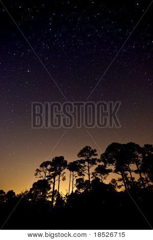 star speckled sky over silhouetted forest