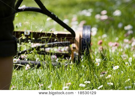 Hand lawn mower close up in meadow with daisies