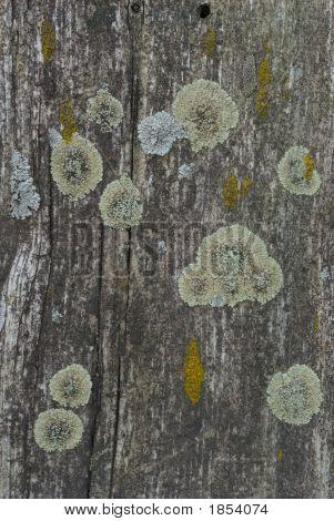 Set Of Lichens