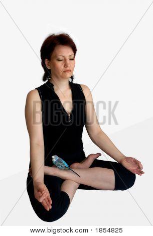 Meditation mit einer parro
