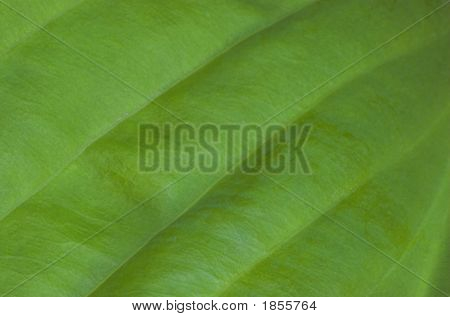 Close Up Leaf