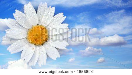 Flower In The Sky