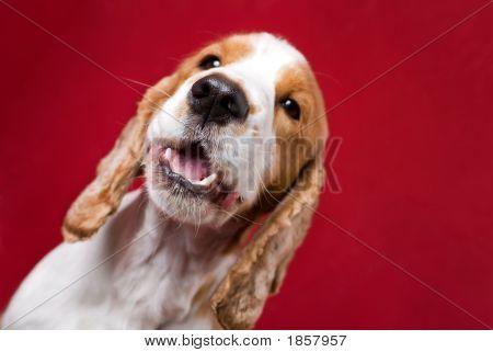 Dog'S Nose.