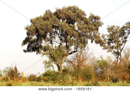 African Bushland