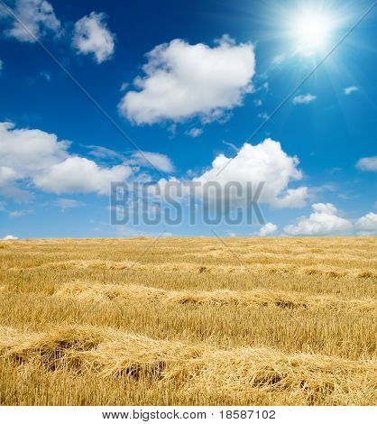 collected harvest in windrows on the field under sunny sky