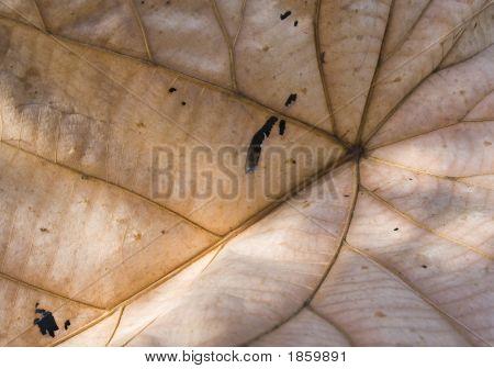 Dried Banana Leaf