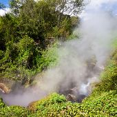 Steaming  Forest in New Zealand