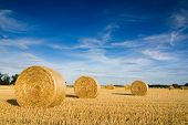 stock photo of hay bale  - Straw bales on farmland with blue cloudy sky - JPG