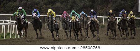 Caballos en hipódromo. Horses in race track
