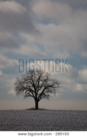 Winter Baum Natur 01