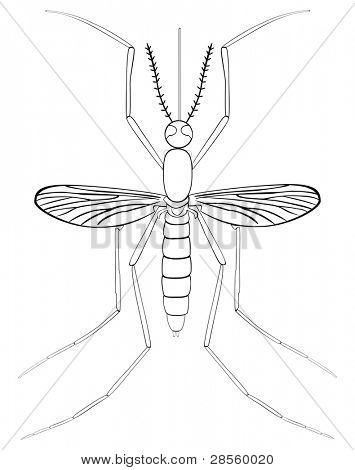 VECTOR - Mosquito Insect