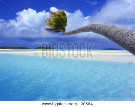 Palm On Lagoon