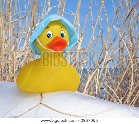 Rubber Duck In Winter Grass
